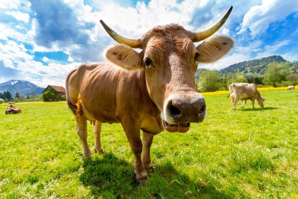 Productos ecológicos de herbolario. Carne vacuna
