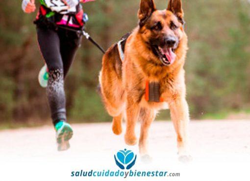 Correr con perros o canicross - beneficios para la salud y consejos
