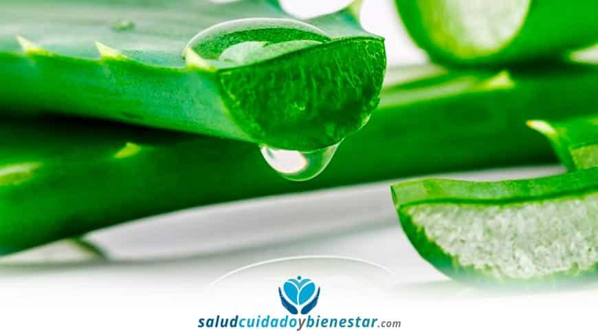 Beneficios y propiedades Aloe o Sábila - Comprar gel, champú, bebida, jarabe, crema...