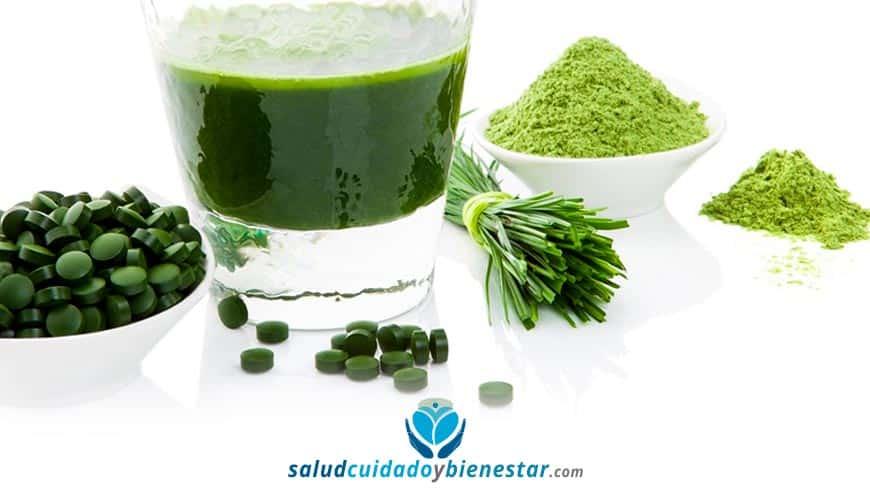Chlorella Ecológica y Orgánica - Beneficios y propiedades, dónde comprar...