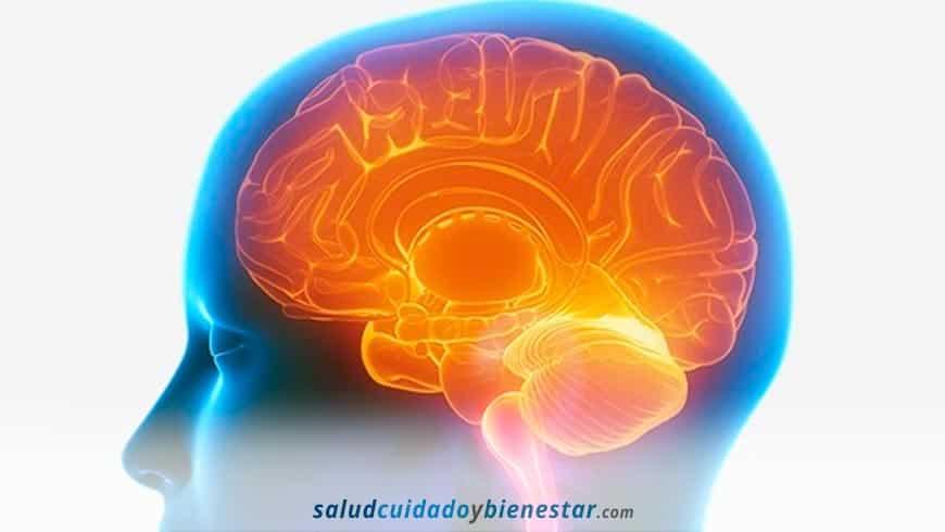 uplementos desconocidos para potenciar tu cerebro - Nootropicos naturales