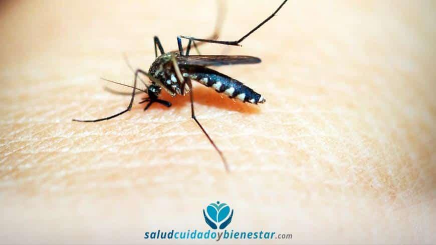 Por qué razón me pican los mosquitos y cómo puedo evitarlo